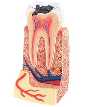 Endodontie, Zahnheilkunde Rendsburg
